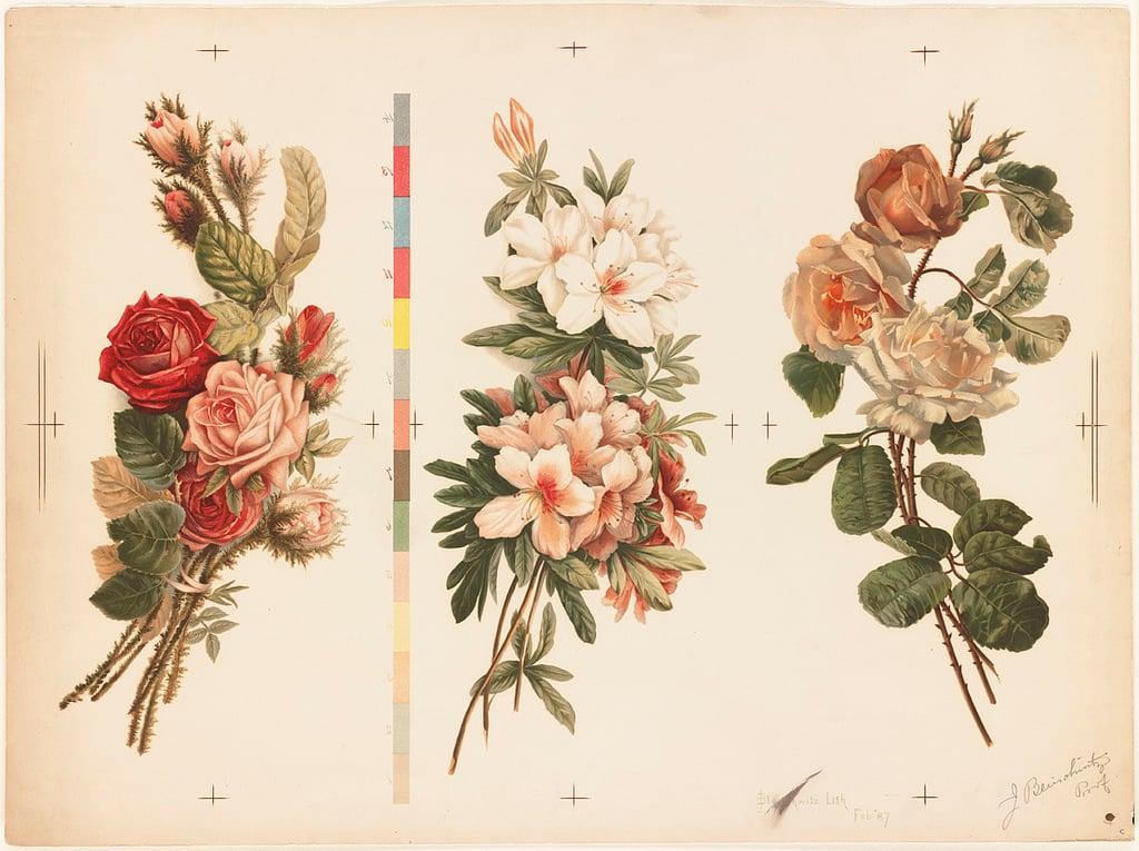 Cover Photo: L. Prang & Co., 1861-1897, Boston Public Library via Flickr